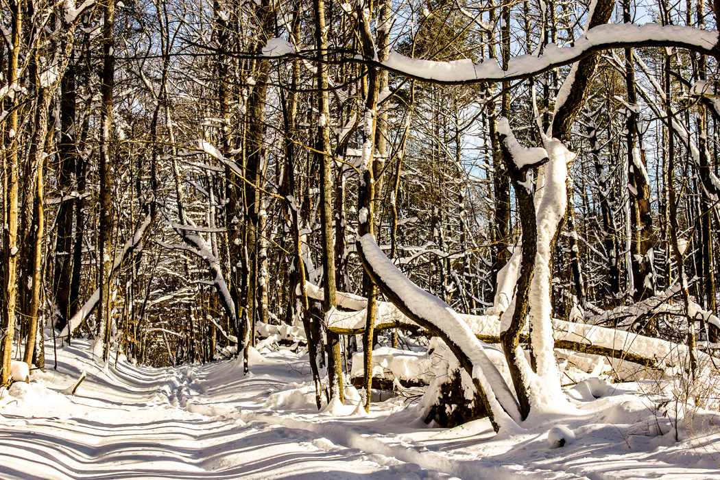 Winter Path, Courtesy of Route 7 Social