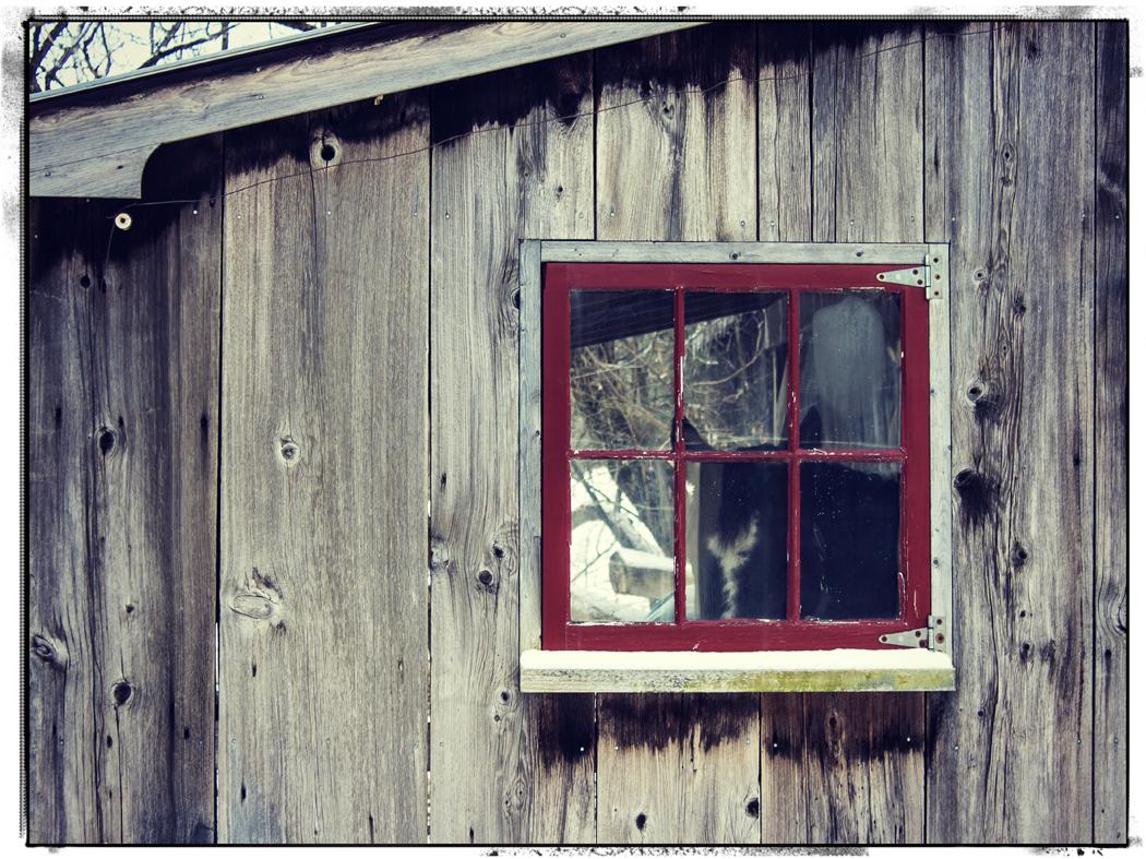 A shy Vermonter