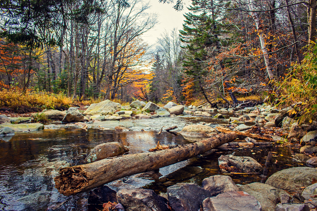 Vermont mountain stream in fall