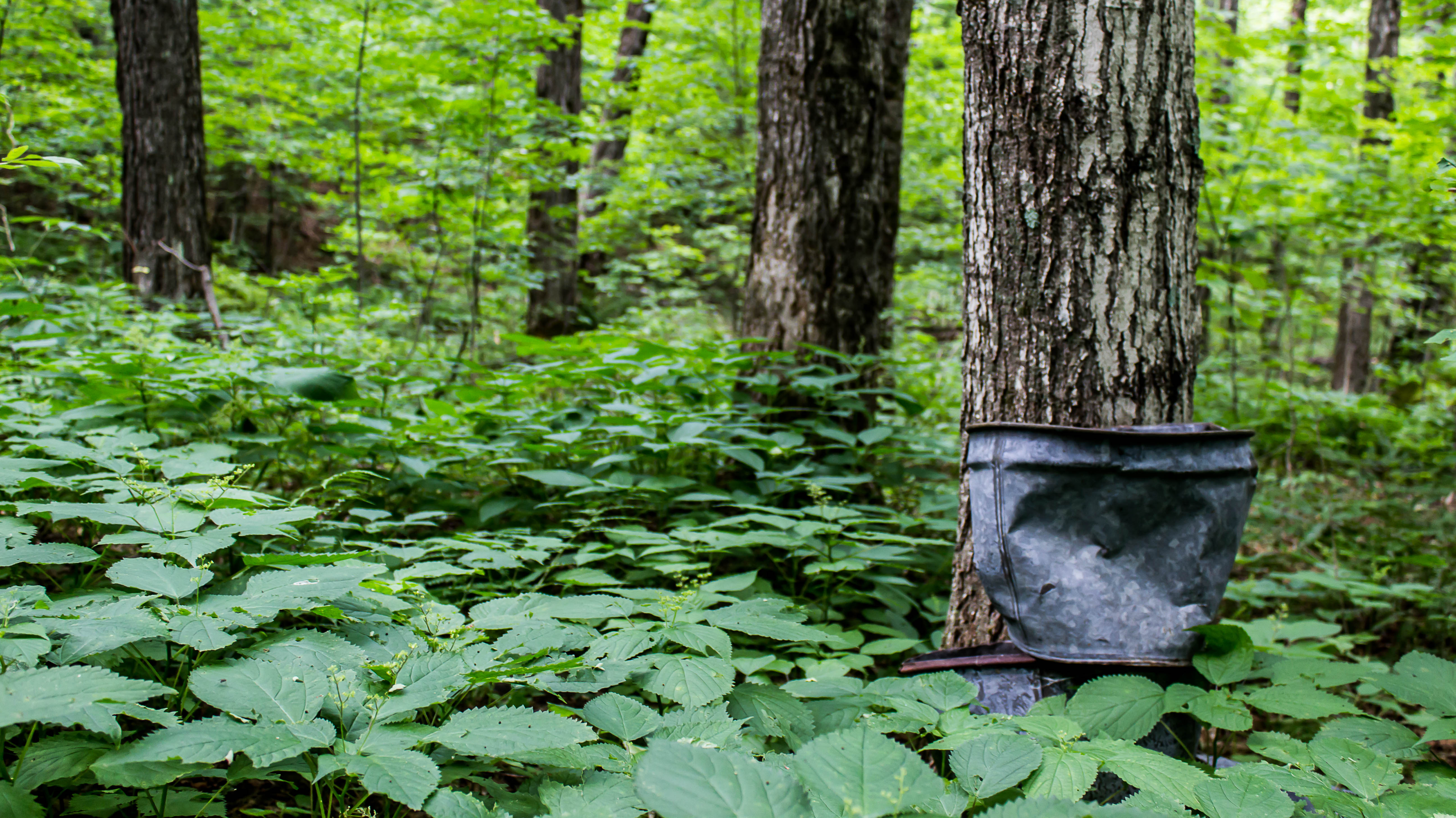 Unspoiled. Generous. Vermont forests give back.